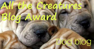 blog_award_dog.jpg