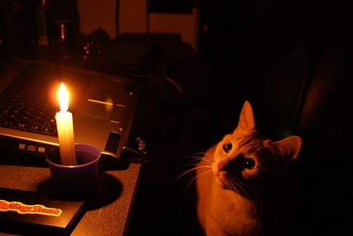 cat_and_candle.jpg