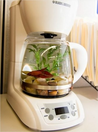 fish coffee maker