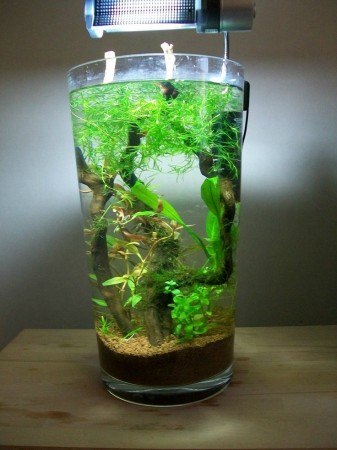 Creating A Living Aqua Scape All The Creatures