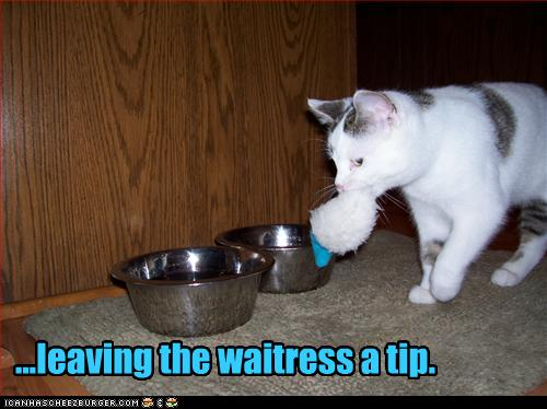 funny_pictures_cat_leaves_waitress_a_tip.jpg