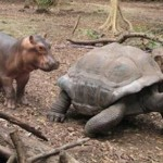 The hippo and the tortise