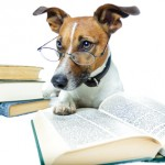 The dog training scams