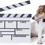 Dogs in the movies and how they affect the puppy industry