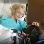 Pet Therapy: a background to animal assisted healing