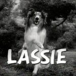 Where is Lassie buried?