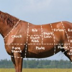 The European (Europa) market has cracked down on horse meat imports