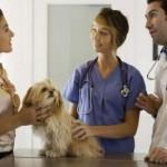The under paid vet tech