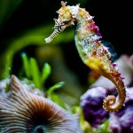 Ebay bans sales of seahorses