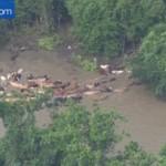 Animals of the Texas floods