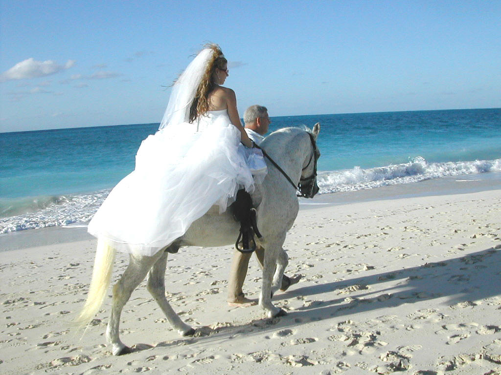 horses and weddings � all the creatures